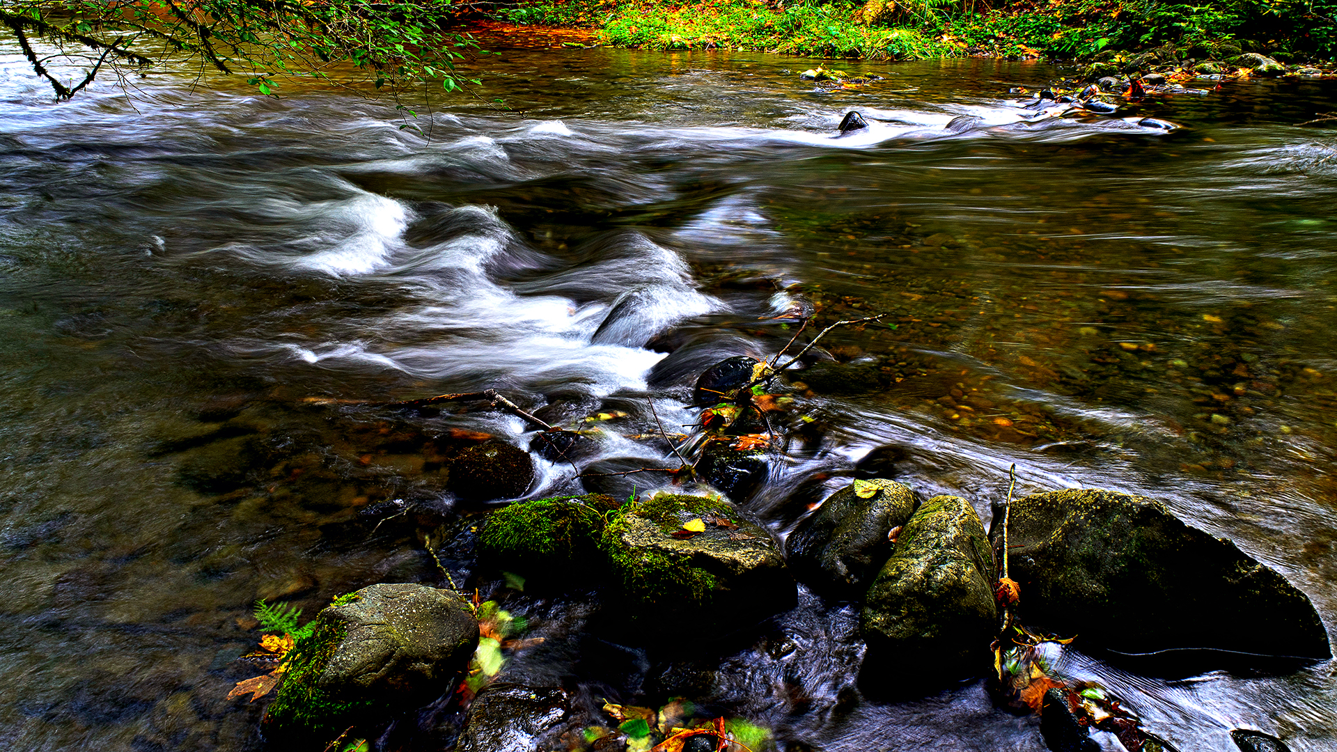 Photograph of Stream on Campbell River, BC