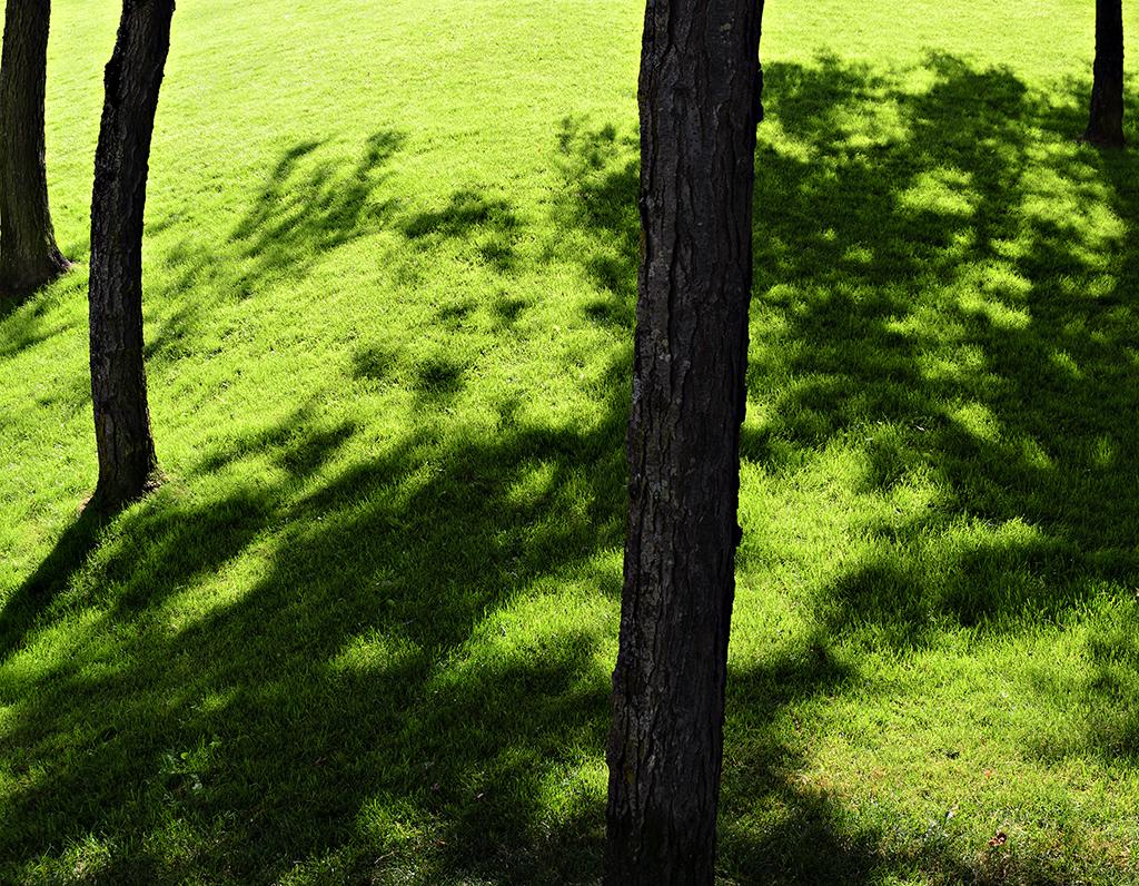 Tree Knoll